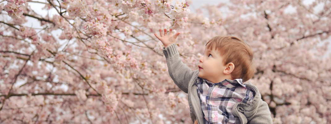 Boy in Blossoms